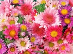 flower_compositions (12)