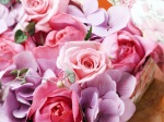 flower_compositions (18)