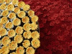 flower_compositions (22)