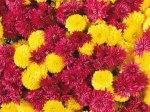 flowers_gift (18)